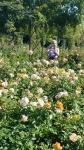 The rose garden 5