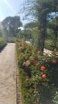 The rose garden 2